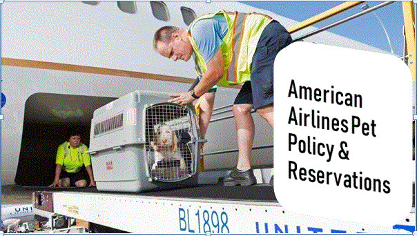 2020-03-17american-airlines-pet-policy.jpg